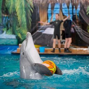 Дельфинарии, океанариумы Ликино-Дулево