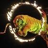 Цирки в Ликино-Дулево