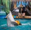 Дельфинарии, океанариумы в Ликино-Дулево